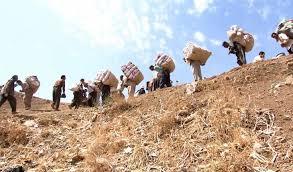 Kurdish kolbars